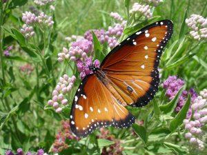 My Healing Mentors Butterfly